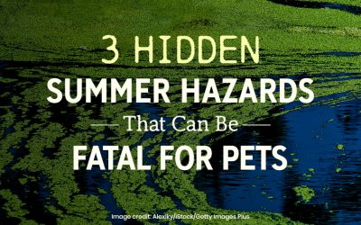 3 Hidden Summer Hazards That Can Be Fatal for Pets