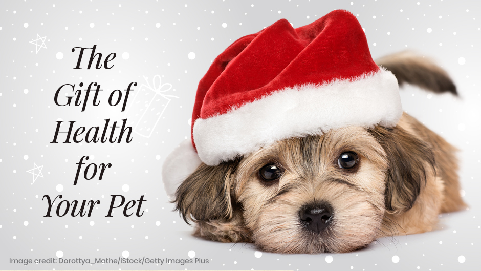 The Gift of Health for Your Pet
